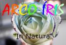 """Adote uma Experiência #2 :: Arco-Íris """"in Natura"""""""