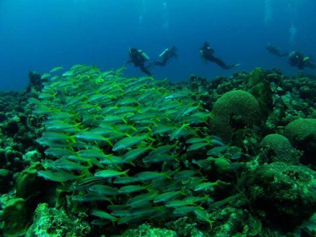 Foto tirada no fundo do mar do caribe – Bonaire – Ilhas Antilhas