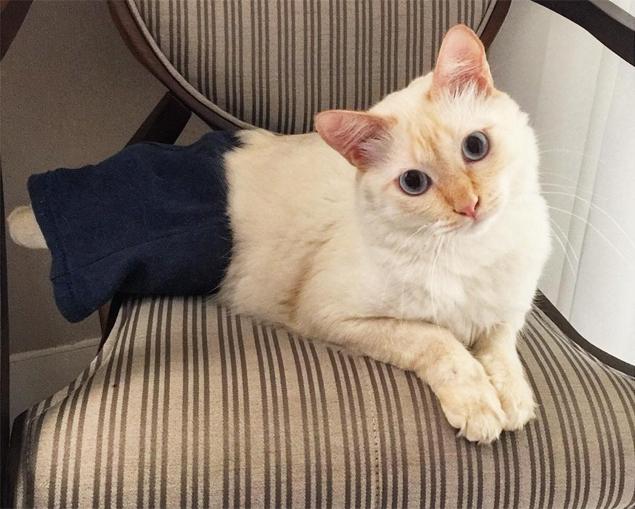 Tom, o gato de bermuda, já conquistou mais de dois mil seguidores no Instagram (Reprodução/Instagram/tom.ogatodebermuda)