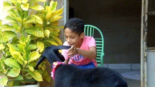 É o Bicho deste sábado (9) mostra os animais de estimação que são também terapeutas