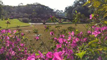 timbo-jardim-botanico-11