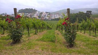 vinivola-luiz-argenta-3