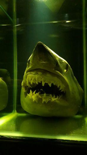 Museu Oceanográfico Univali Tubarão Branco