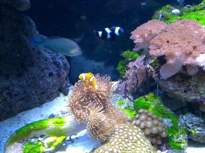 Museu Oceanográfico Univali Nemo