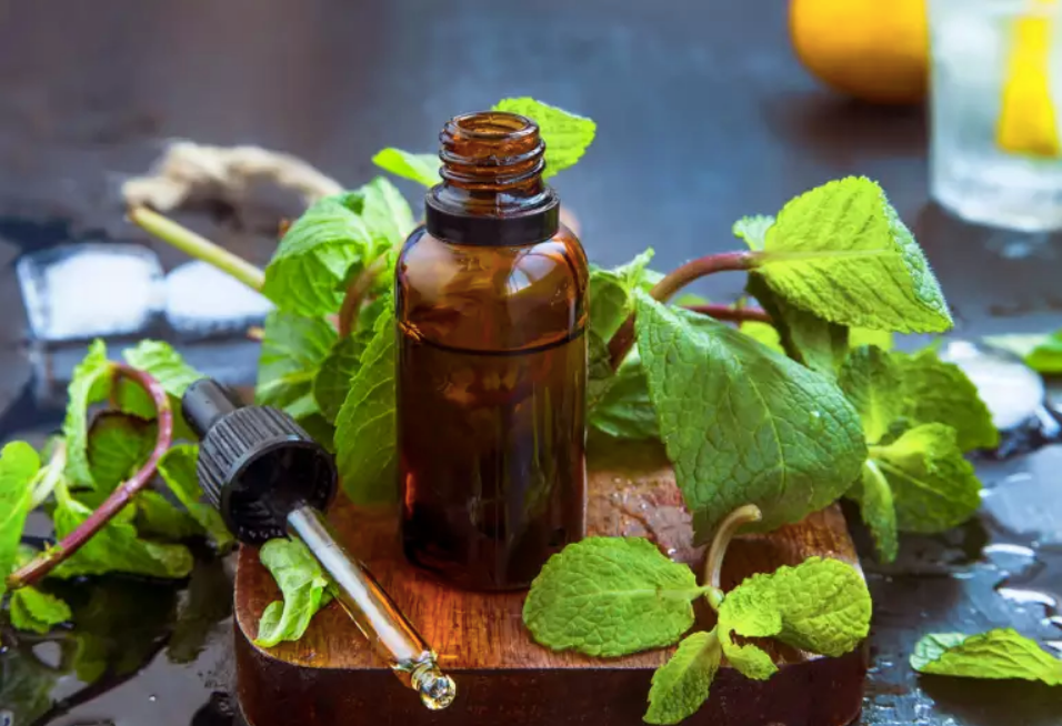 best essential oils for nutrient absorption