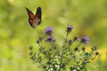Farfalla nel giardino