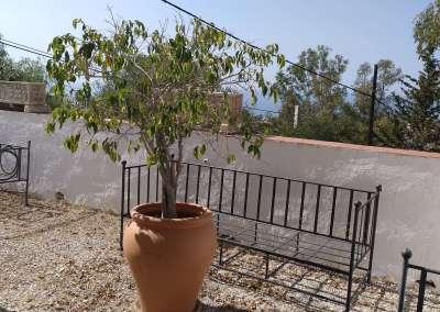Casa La Mimosa, Chilches