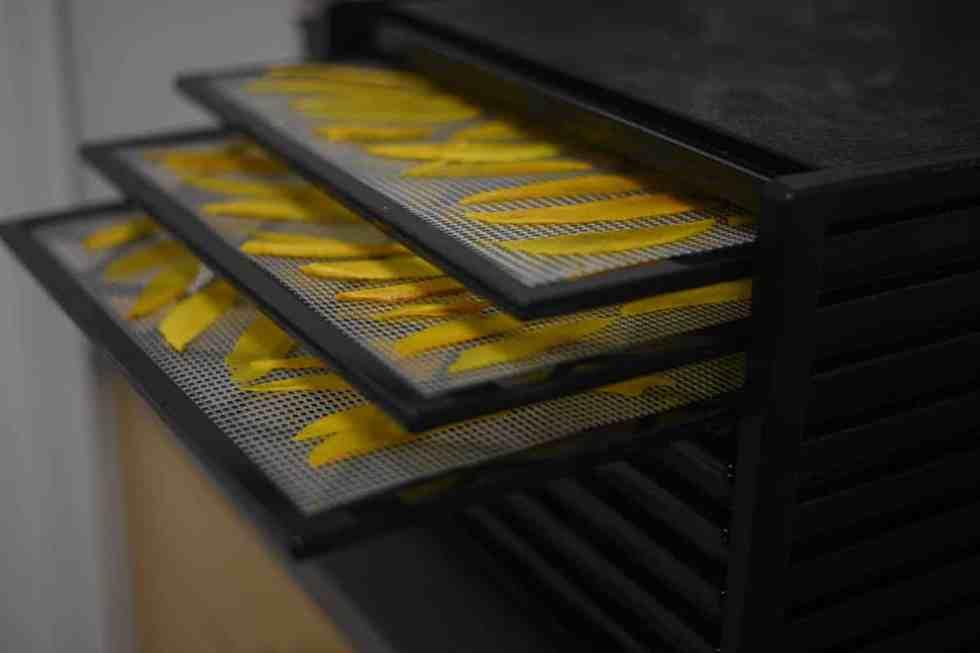 Mango chips in dehydrator