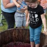 Little girl stomping grapes, Purple Foot Festival at Casa Larga Vineyards