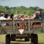 Hay ride, Purple Foot Festival at Casa Larga Vineyards