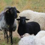 casa rural granja ovejas