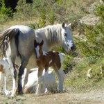 casa-rural-animales-caballos
