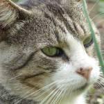 casa-rural-animales-gato-2