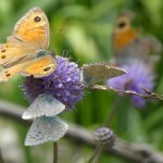 casa-rural-animales-mariposa