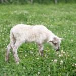 casa rural granja corderos