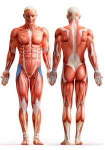 Fascia muscolare