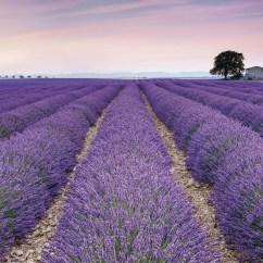 xxl4-036 Provence