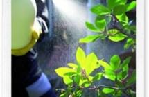 Anticrittogamico naturale per il giardino: l'infuso di equiseto