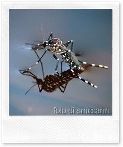 La zanzara tigre