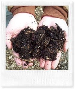 piante e giardinaggio: fertilizzanti dalla cucina