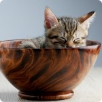 PAppa per gatti ricette: bocconcini di mare con carote e zucchine