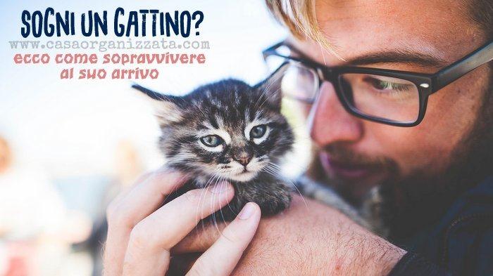 Come prepararsi all'arrivo di un gattino a casa