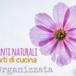 Fertilizzanti naturali dagli scarti di cucina per le piante di casa e terrazzo