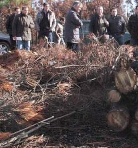Subasta de madera quemada en incendio