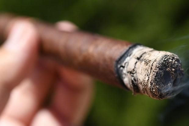 Dunbarton-Tobacco-Trust-Mi-Querida-Triqui-Traca-6