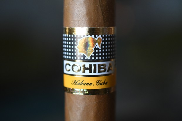 cohiba-robustos-2