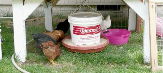 hen-feeder4