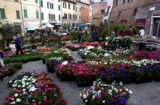 [:en]flowers' festivity[:it]festa dei fiori[:]