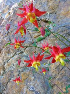 Gorgeous Wildflower
