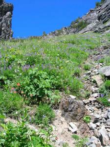 Meadows below Stujack Pass