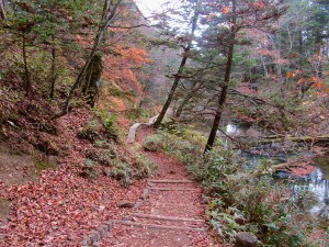The wooden boardwalk on the Senjogahara Hiking Trail