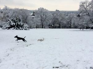 New friends enjoying the snow in Riegrovy Sady.