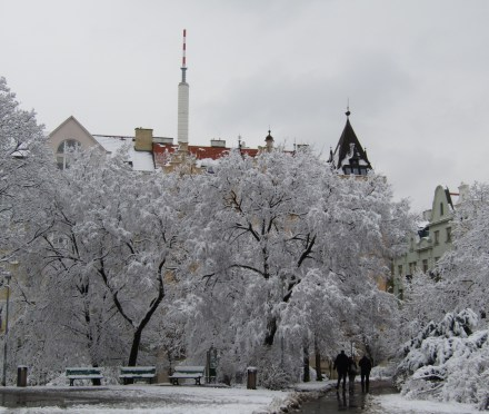The antenna of the Žižkov Television Tower pokes up over a grove of trees in Vinohrady.