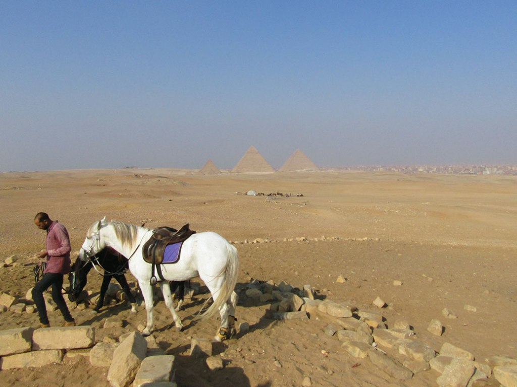 Tamer leading the horses to a resting spot.