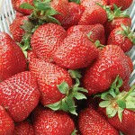 Strawberry - Albion