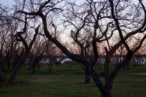 Lake Arrowhead Sunrise