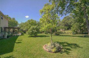Avondale backyard