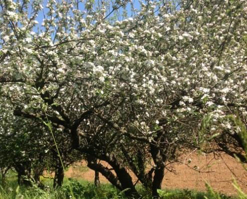 Agricoltura - Cascina degli Ulivi - Stefano Bellotti