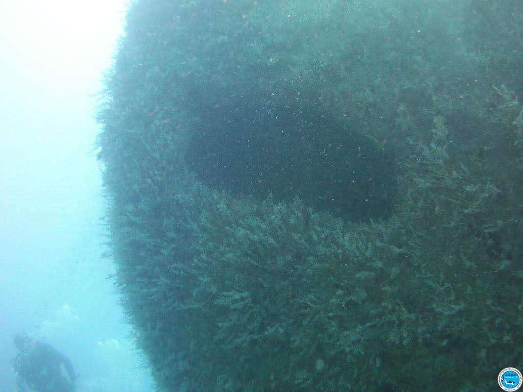 Viajando a bucear en las aguas brasileiras 28