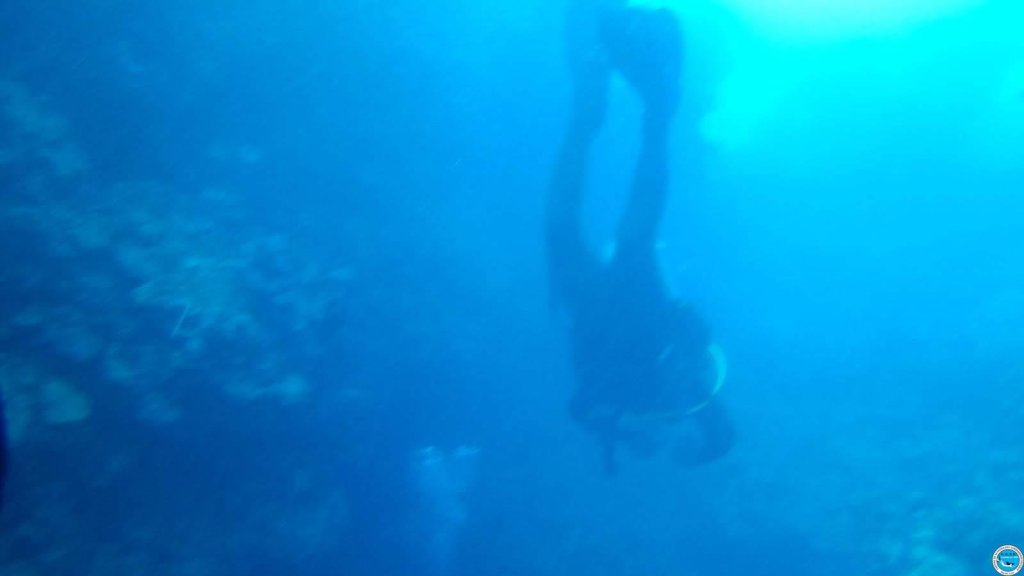 Viajando a bucear en las aguas brasileiras 40