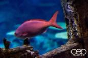 Shark Reef Aquarium at Mandalay Bay — Creole Fish