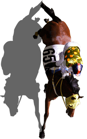Breeder's Cup Classic horse