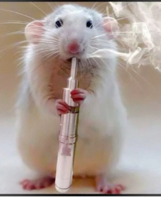 The effects of drugs on rats during the experiment