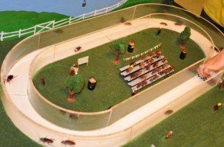 Cockroach Racing. (Image credit: purdue.edu)