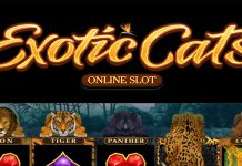 Microgaming's Exotic Cats Slot Officially Launches Across All Platforms