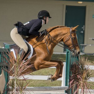 horseback riding competition hunter/jumper